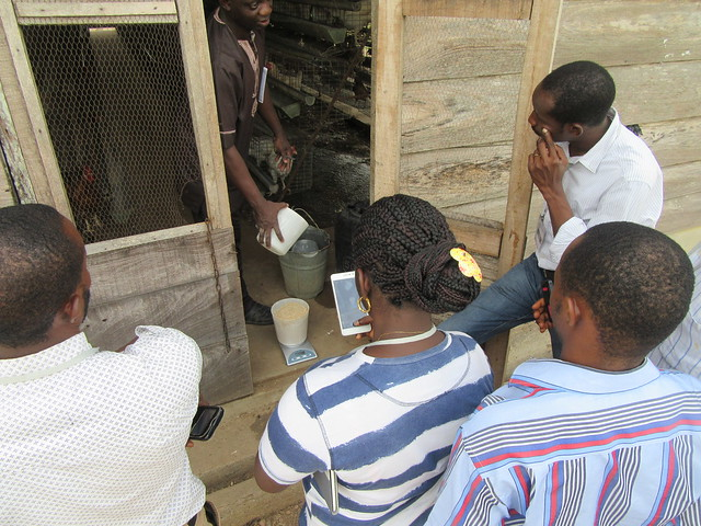 On-station demonstration of (measurement of research parameters) at Obafemi Awolowo University (OAU) poultry farm in Nigeria