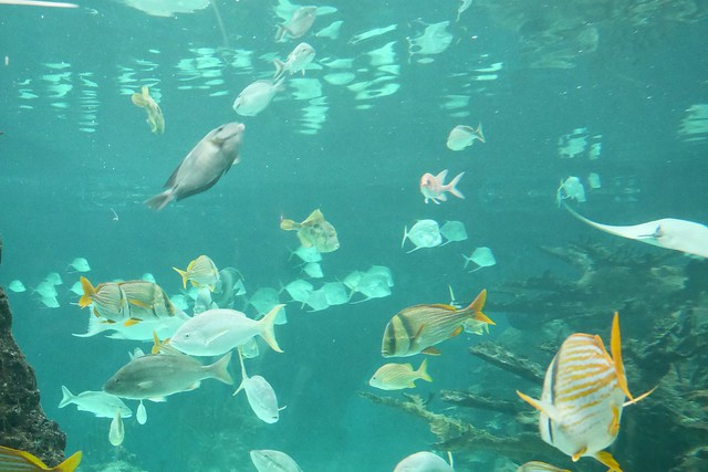 日, 2016-03-27 15:03 - New York Aquarium in Coney Island 水族館