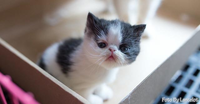 加菲猫@船长