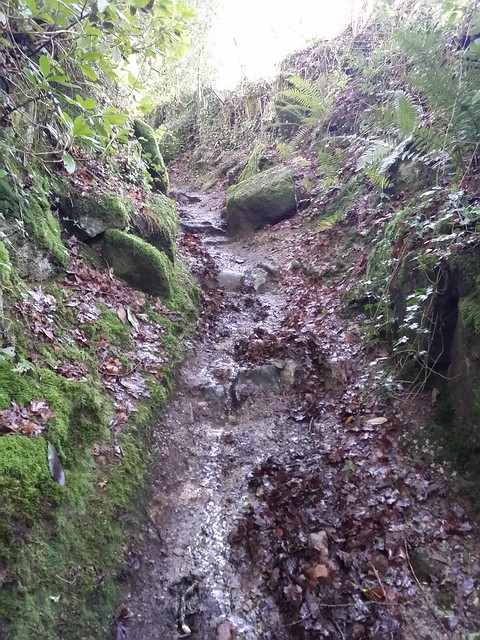 Footpath up to Sharpitor (Lustleigh)