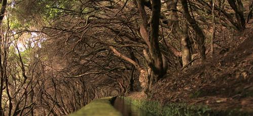 Madeira - Levada das 25 Fontes