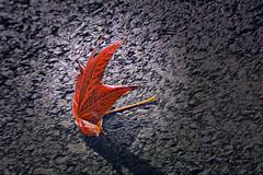 A single leaf
