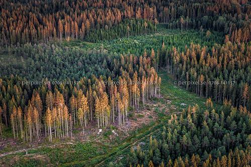 skog sverige swe ödeborg västragötaland flygfoto torsbyn