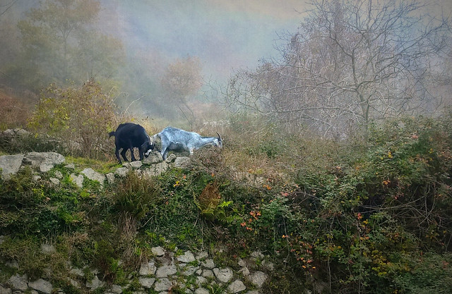 an unexpected encounter in the mist