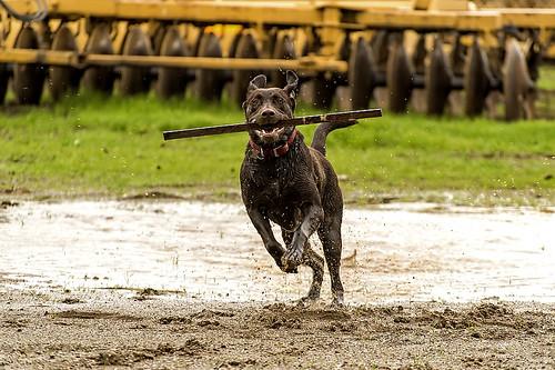 20160110_ RICE DOG 1165_online copy