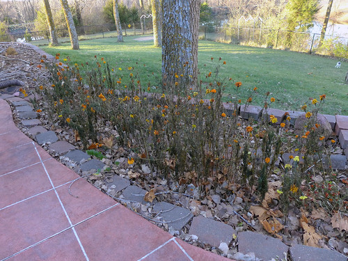 2015-11-23 - Dead Marigolds - 0001 [flickr]