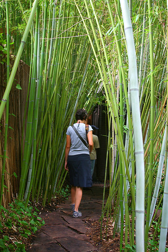 Green bamboo tunnel