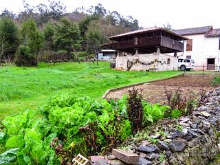 Camino Primitivo - 1 Oviedo-Grado (26)
