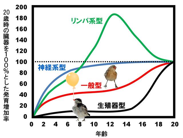 スキャモンの成長曲線(scammon's growth curve)|真・視力回復法|視力回復コア・ポータル