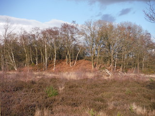 Smaller wooded hillock on Bucklebury Common