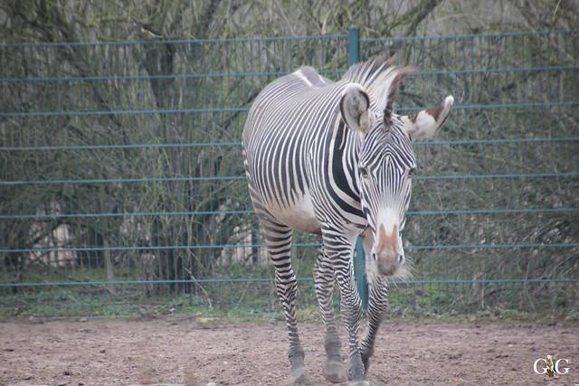 Besuch Tierpark Friedrichsfelde 14.02.201666