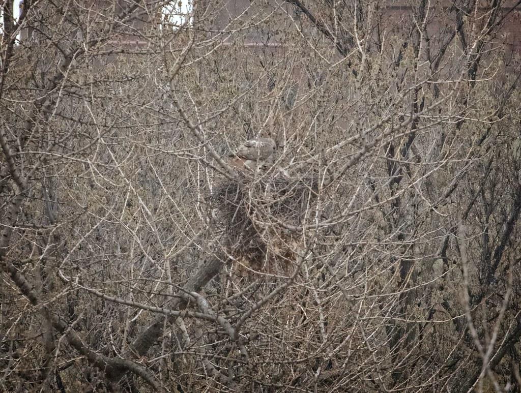 Christo & Dora on the nest