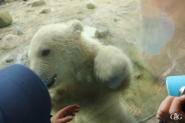 Zoo Bremerhaven 09.04.16 2.Teil52