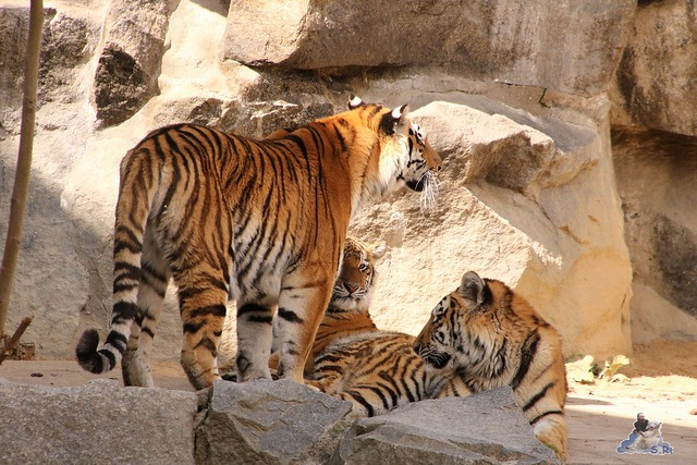 Tierpark Berlin 17.04.2016  0193