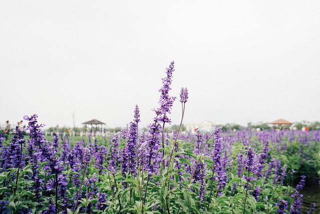 台中 • 中社花海