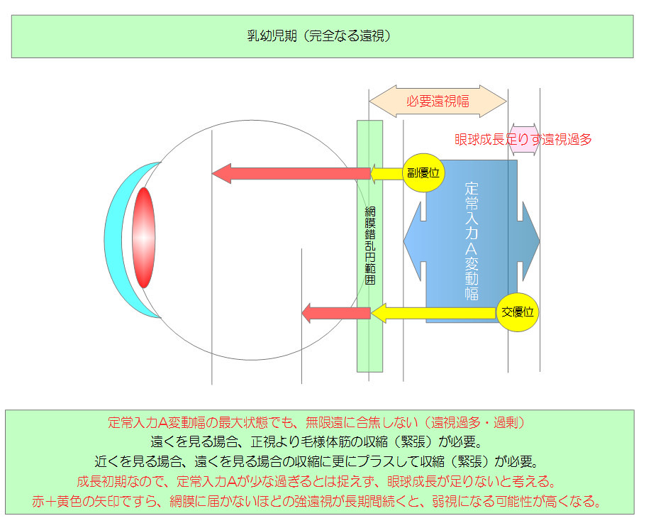 視力回復のために知りたい眼のメカニズム|独自まとめその10用01|乳幼児期(完全なる遠視)|真・視力回復法|視力回復コア・ポータル