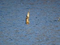 Twin Lakes preserve -South Lake - 2.22 (22)