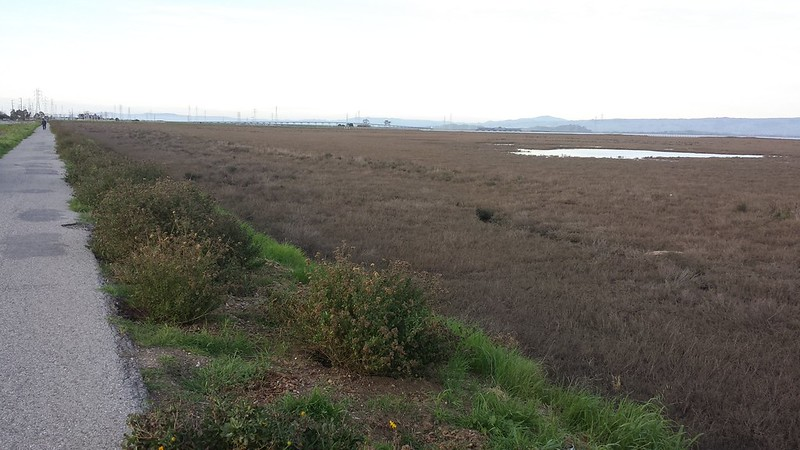 View of Dumbarton Bridge from the Bay Trail