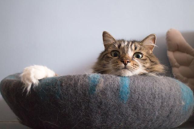 Cat Geeks Cat Cave_8