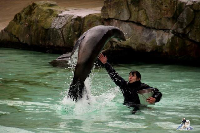 Zoo Berlin 11.03.2016   038