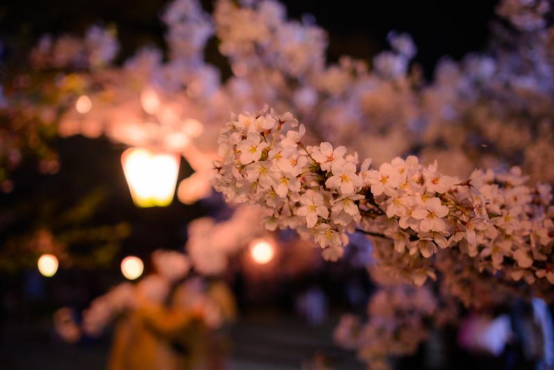 久松公園 2015-5
