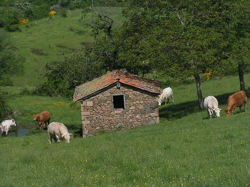 20080514 22756 0904 Jakobus Wiese Hütte Kühe
