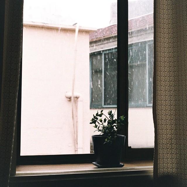 Flowerpot in Window