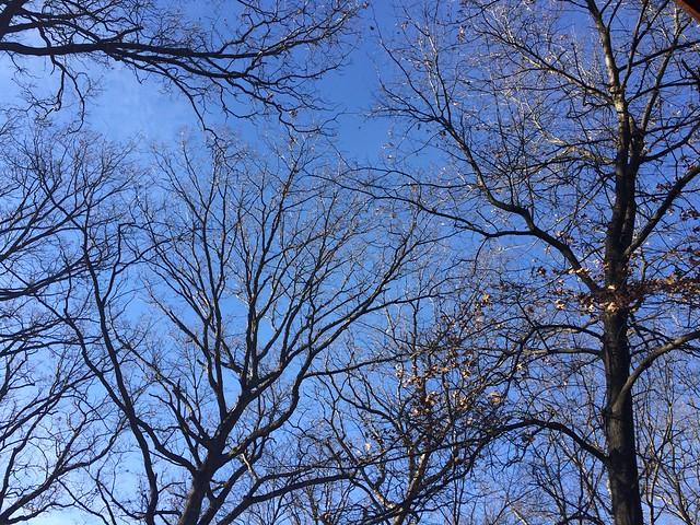 A beautiful blue sky day in winter