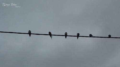 bird birds animal wire outdoor