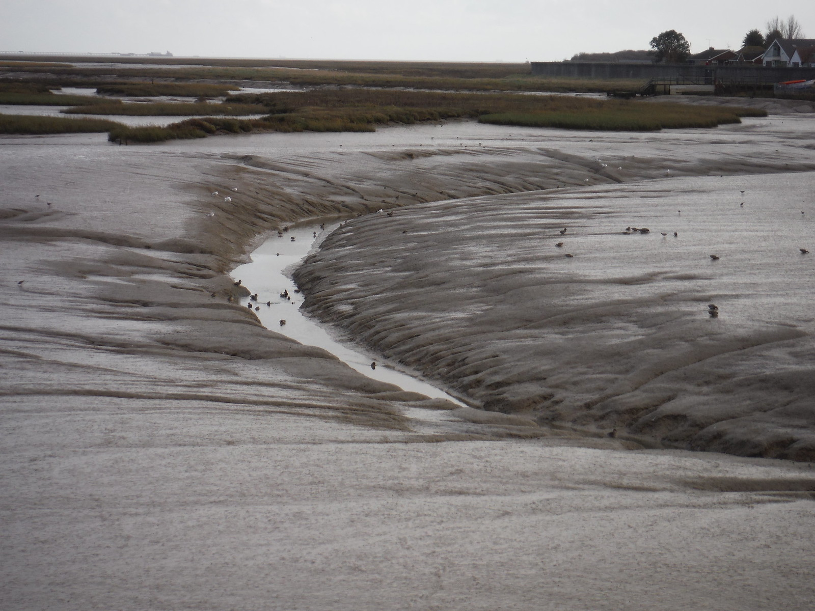 Channel in Creek at Low Tide, Canvey Island SWC Walk 258 Benfleet Circular (via Canvey Island)