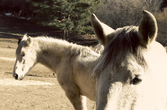 horses in Cercedilla, Spain (2015)