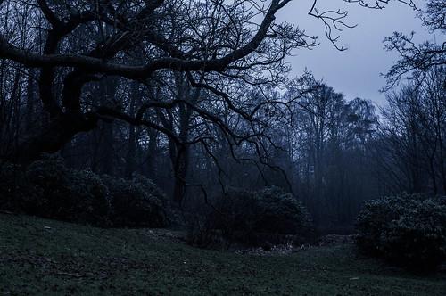 auto trees nature forest dark 50mm pentax dusk chinon pentaxkx f19 autochinon gramslotspark