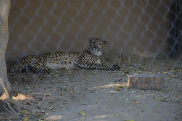 san diego zoo-128