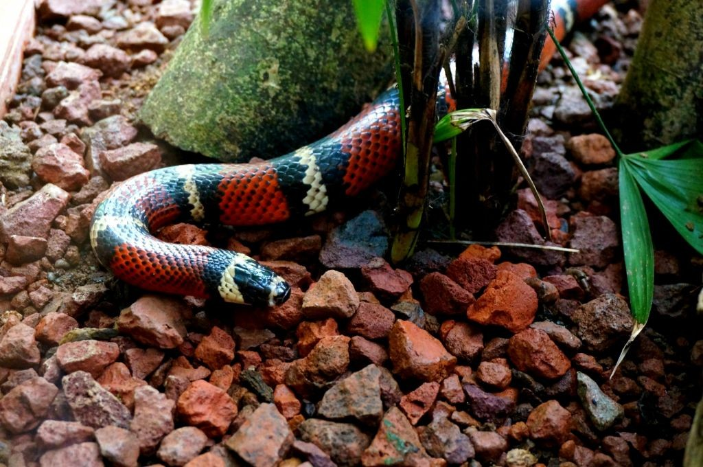 Colorful Snake At the Jaguar Rescue