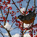 Bird Food by paulv2c