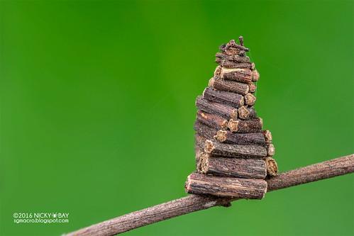 Bagworm moth larva (Psychidae) - DSC_4077
