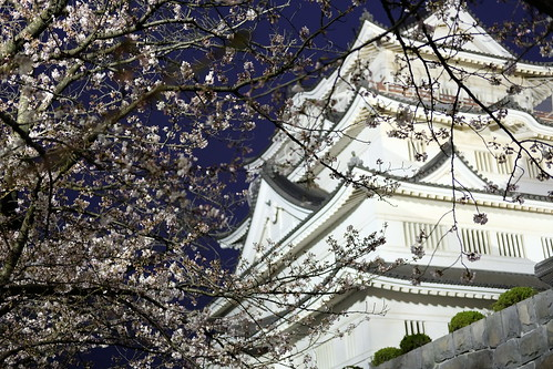Chiba Castle with cherry blossoms 09