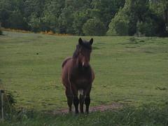 20080514 22890a 0904 Jakobus Wiese Pferd - Photo of Saint-Sixte