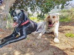 Shiloh and Cassie taking a shade break