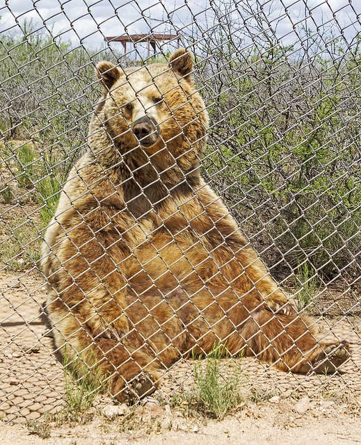 Bear 136_7d1__250416