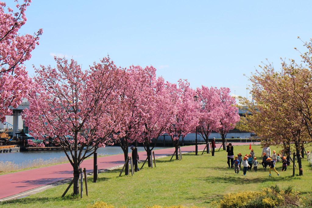 Japan 2016: Sakura Blossom