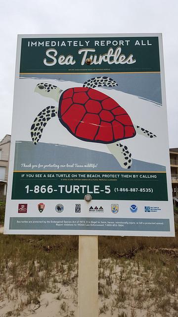 Report Those Turtles!