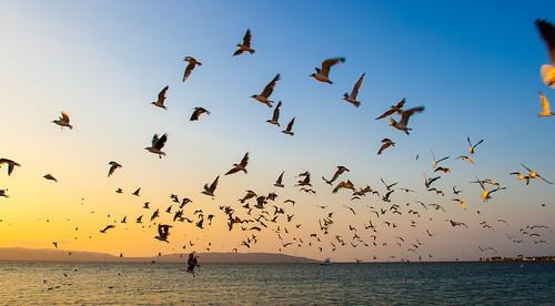 sunset wild birds perú paracas