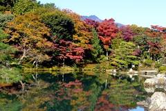 Tenryu-ji, Sogenchi Teien (Garden) -1 (November 2008)
