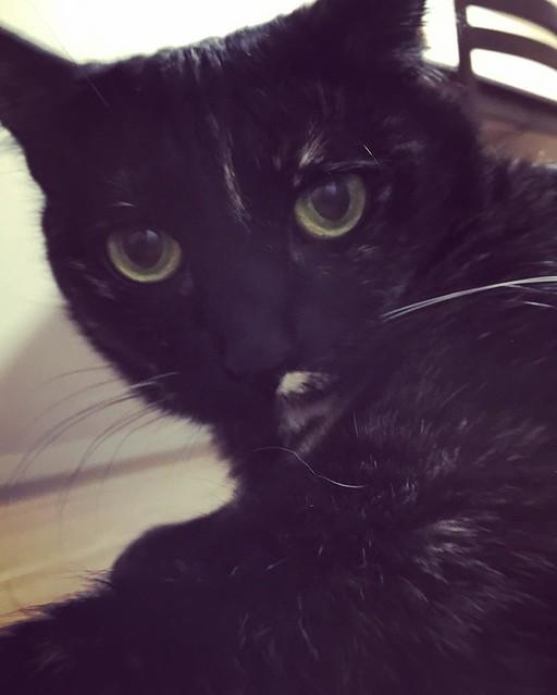 睨まれました😓 #cat #cats #catsofinstagram #catstagram #instacat #instagramcats #neko #nekostagram #猫 #ねこ #ネコ# #ネコ部 #猫部 #ぬこ #にゃんこ #フワモコ部