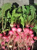 queen scarlet red stem salad turnips