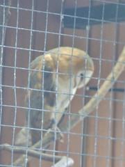 Cheshire Falconry - Bird of Prey Centre