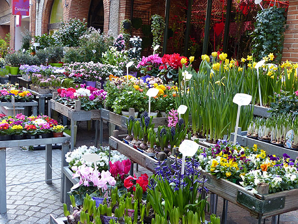 fleurs montauban