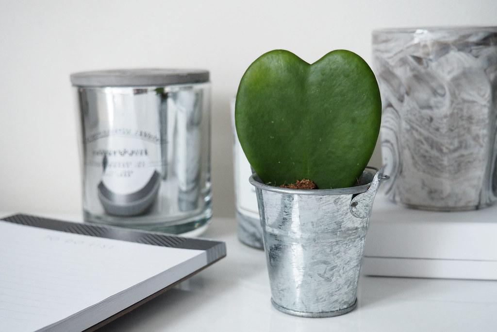 love heart succulent