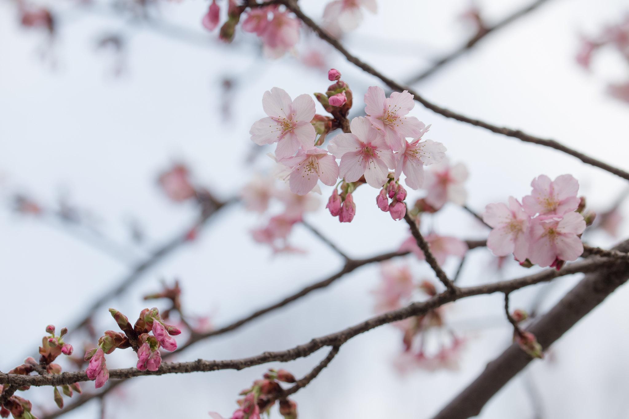 2016-03-04 カワセミ 001-26